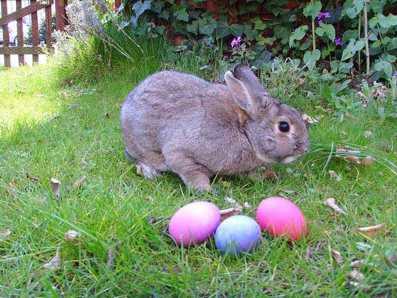 ארנב וביצי פסחא