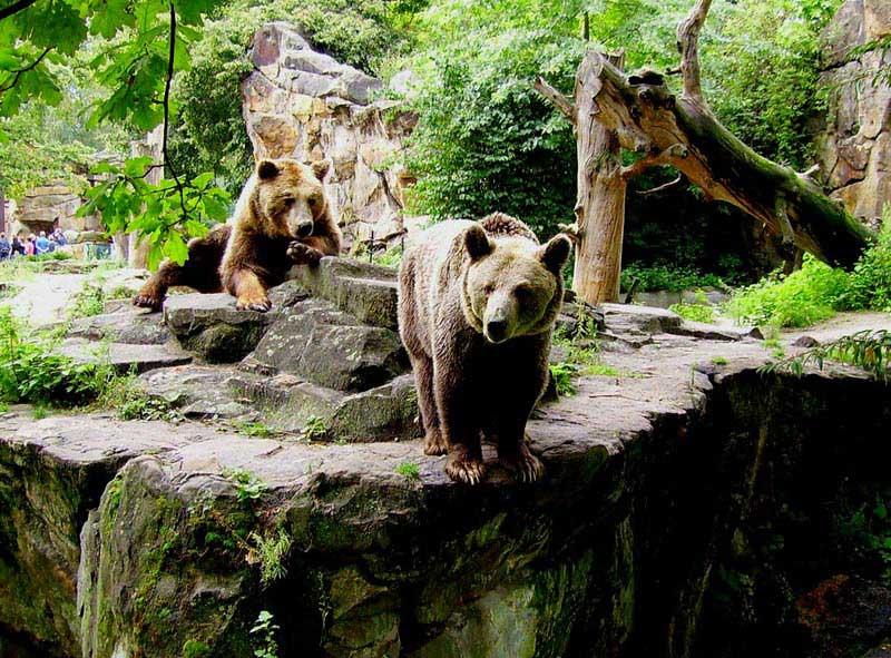 דובים בגן החיות של ברלין