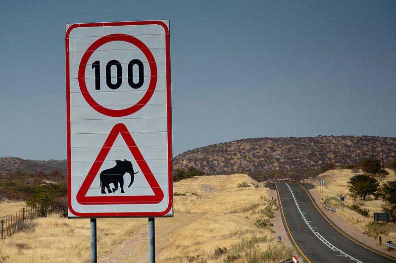 פילים בדרך. סעו לאט!