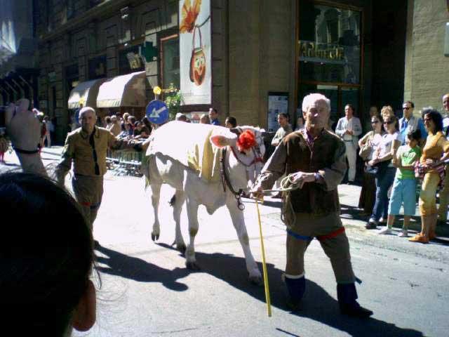 הפרס - פרה מגזע קיאנינָה