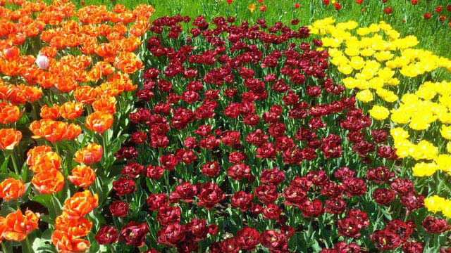 צבעונים בפארק בריץ