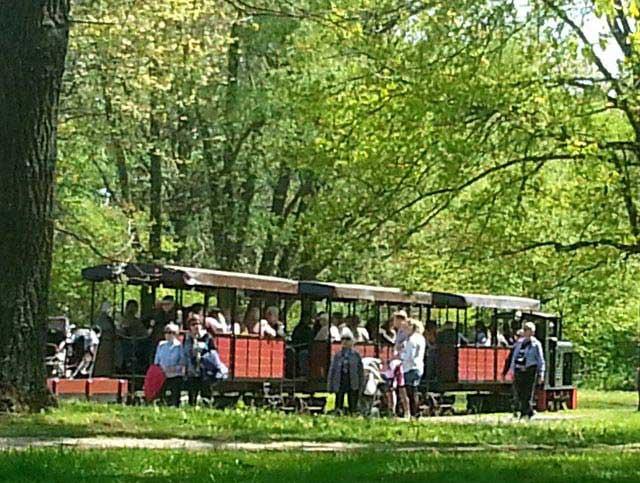 הרכבת בפארק