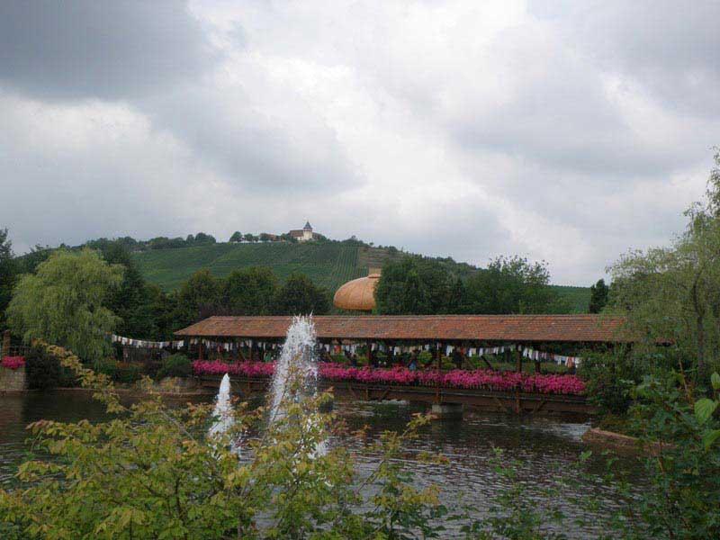 נוף הכרמים המקיפים את הפארק