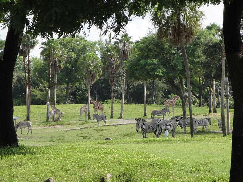מישורי סרנגטי במתחם פארק השעשועים בוש גארדנס