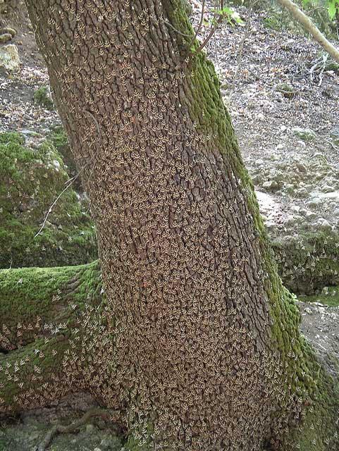 הפרפרים נצמדים לגזעי העצים ולסלעים