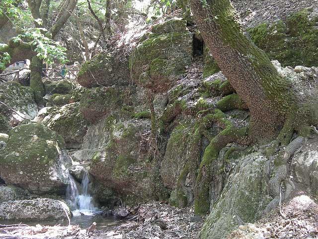 נחלים מתפתלים, מפלי מים קטנים ואלפי פרפרים