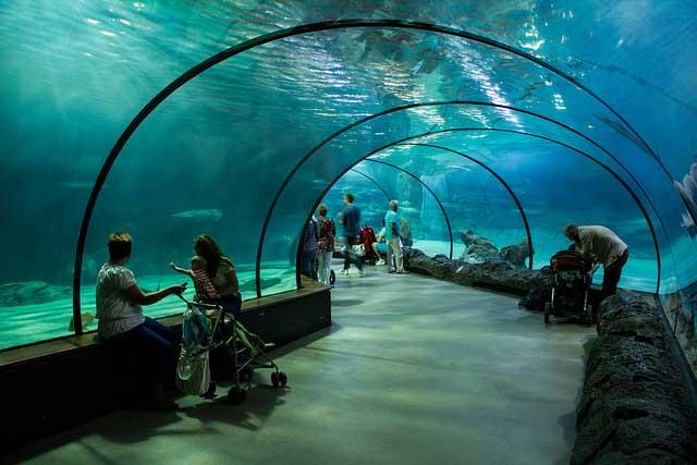 Oceanium בגן-החיות בליידורפ שברוטרדם
