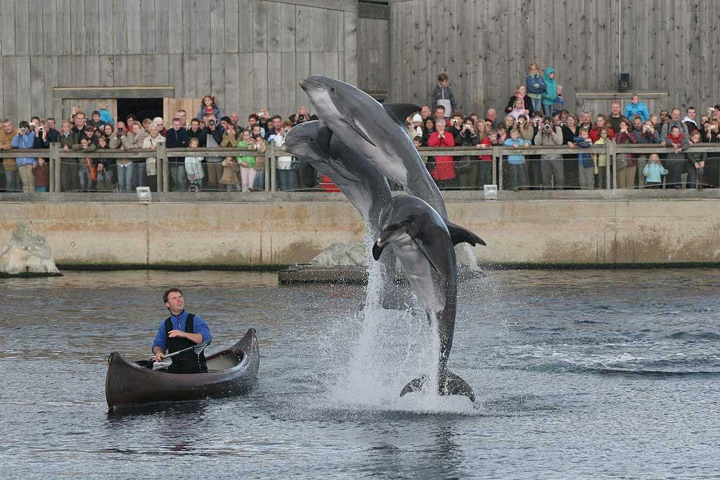 מופע דולפינים בדולפינריום
