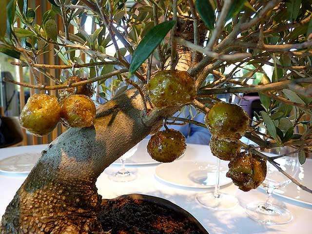 זיתים מקורמלים על עץ בונסאי