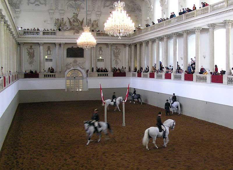 סוסי ליפּיצאנֶר לבנים באולם לרכיבת חורף של בית הספר הספרדי לרכיבה (Spanish Riding School), בה מבצעים