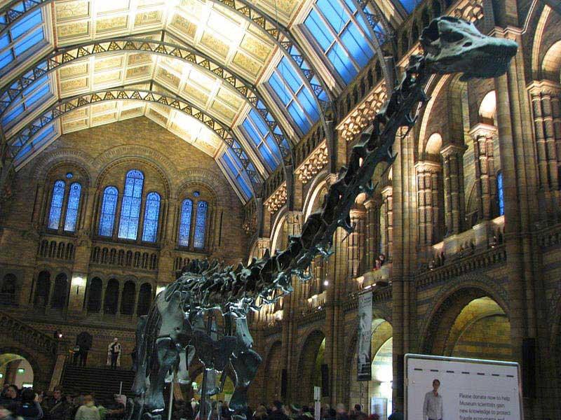 דיפי הדיפלודוקוס בכניסה למוזיאון הטבע של לונדון