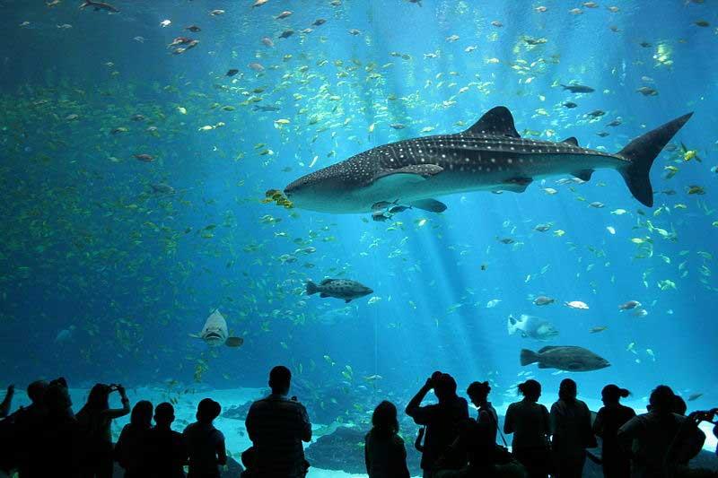 כריש באקוואריום