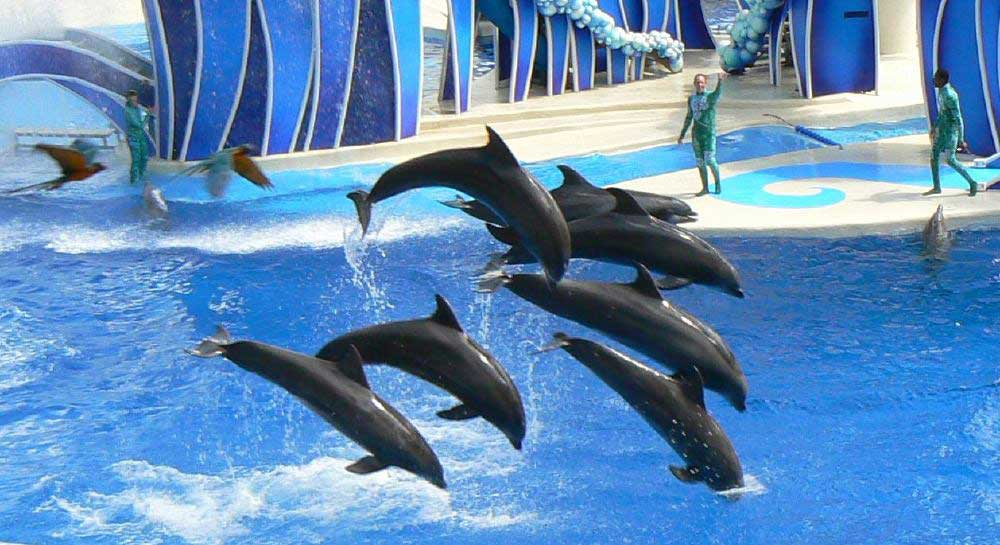 דולפינים מופיעים בסיוורלד אורלנדו