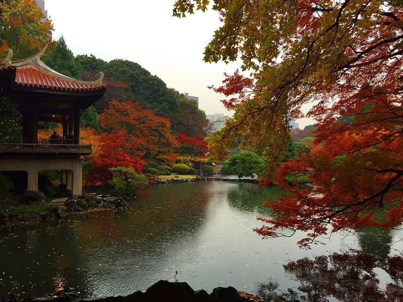 טוקיו בשלכת