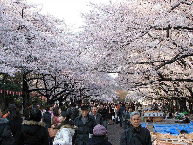 חגיגות ההאנאמי בפארק אואנו שבטוקיו