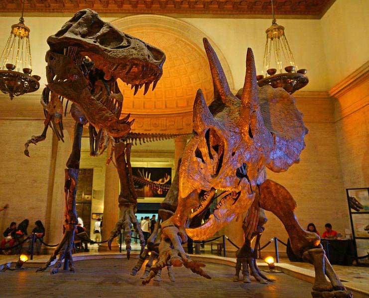 שלדי טירנוזאורוס רקס וטריצרטופס במוזיאון מחוז לוס אנג